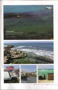 cilantro-june-july-2013